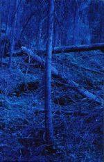 Blå Skog / Blue Forest
