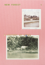 New Forest 1, A History of Cows