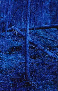 blueforest_cover2